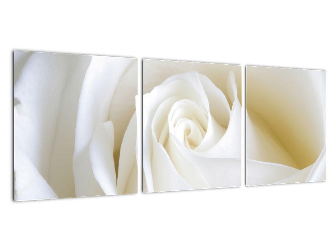 Tablou - trandafiri albi