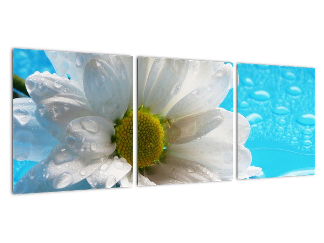 Tablou - margaretă floare