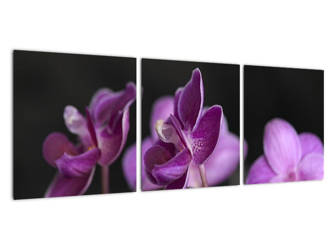 Tablou - flori
