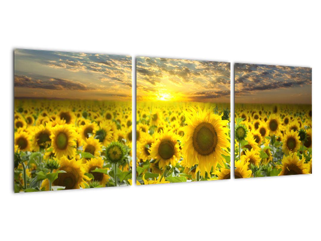 Tablouri - floarea-soarelui