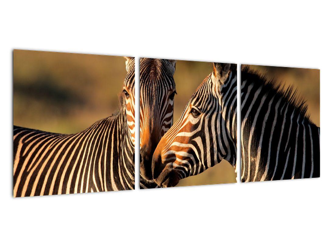 Tablou - zebre