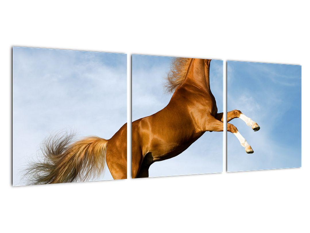 Tablou - cai pe spate