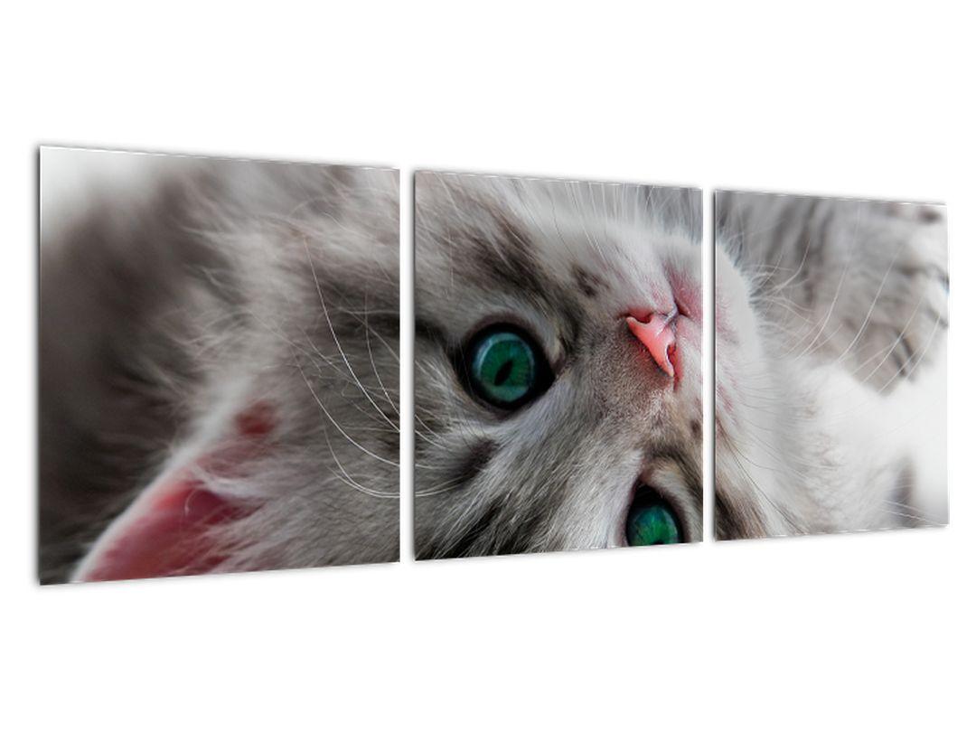 Tablou - pisici