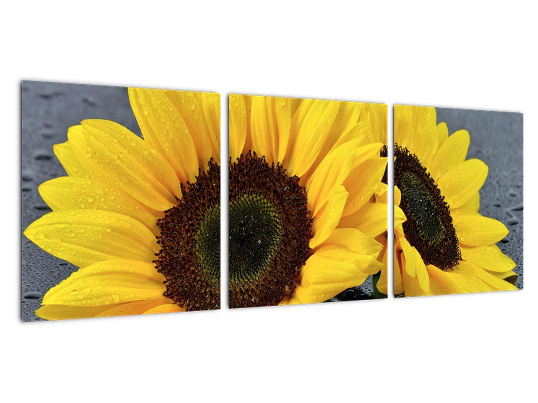 Tablou - floarea-soarelui