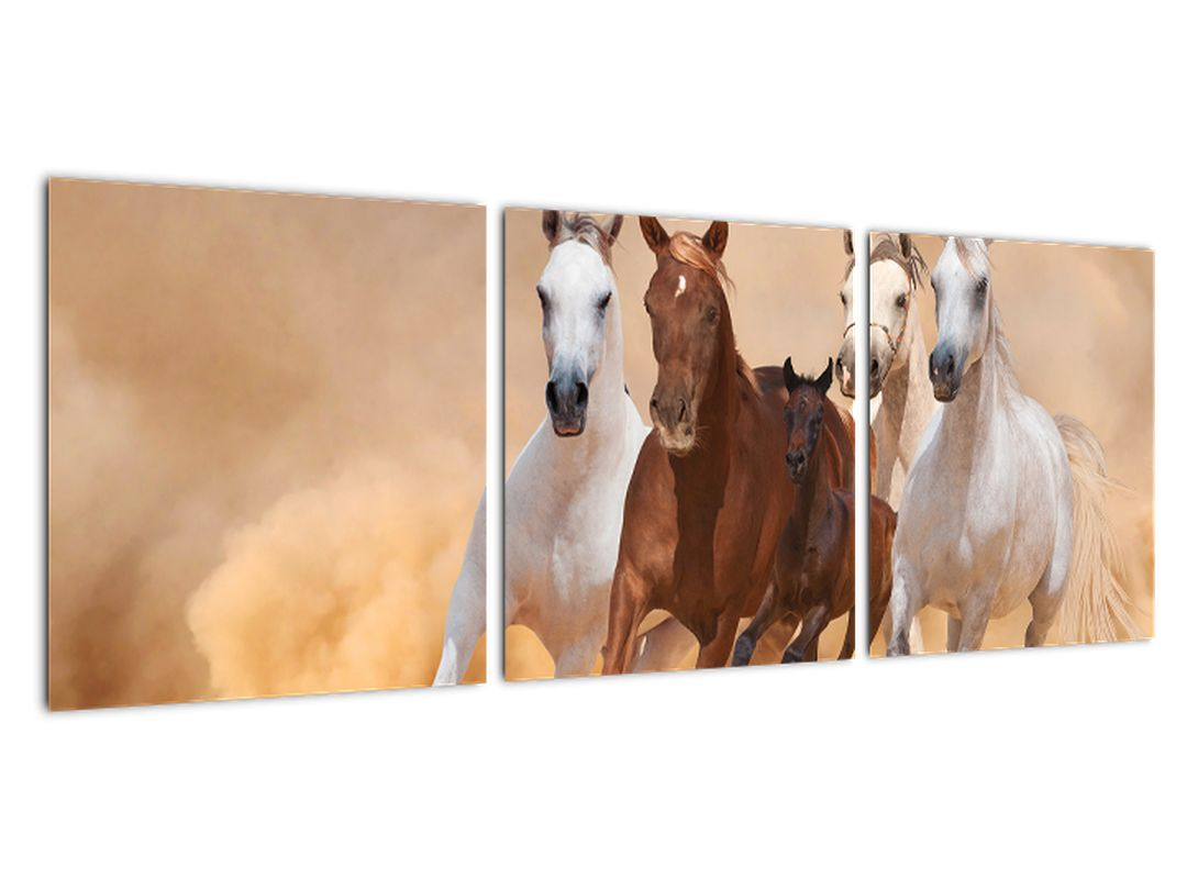 Tablou modern - cai care aleargă